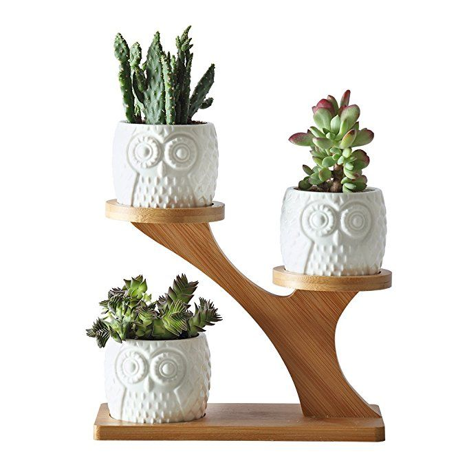 2 75 Inches Ceramic Modern Decorative Small Owl Pot With 3 Tier Bamboo Stand 3pcs Owl Pots With A Hole Small Indoor Plants Small Plant Stand House Plants Decor
