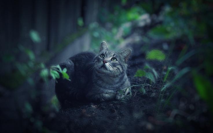 ...: Kitty Meowmeow, Cat Especi