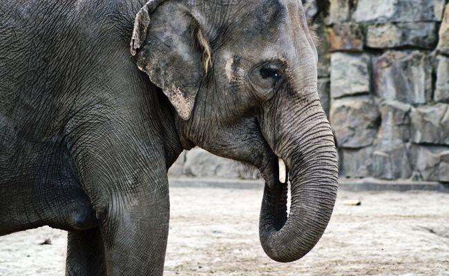 This Zoo Is Sending All Of Its Elephants To A Sanctuary    Care2 Causes