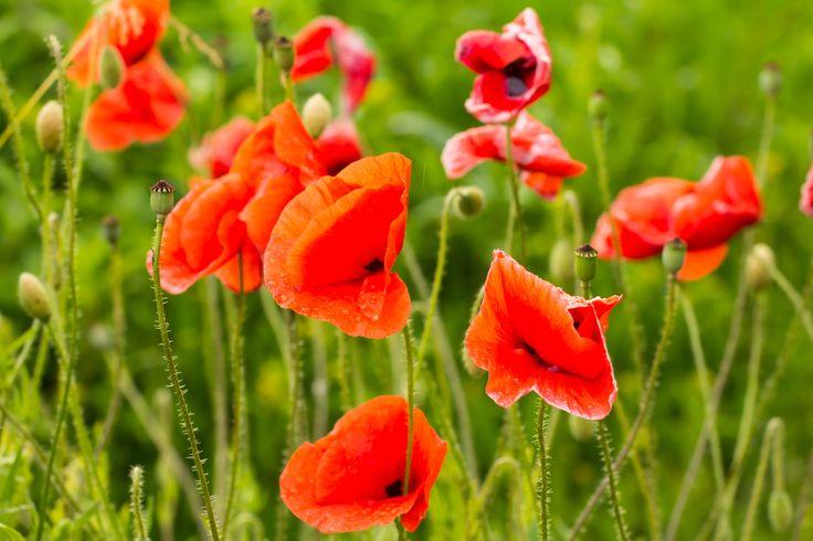 Kwiatowe kremy: http://bleuet.pl/bo-najpiekniesze-sa-polskie-kwiaty/