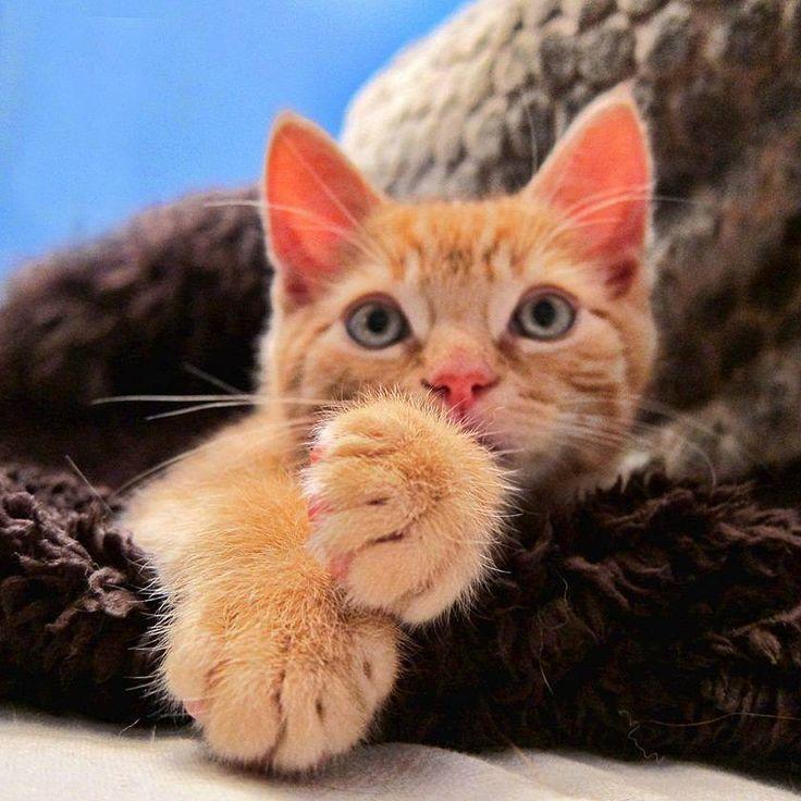 Рыжие кошки. Обсуждение на LiveInternet - Российский Сервис Онлайн-Дневников