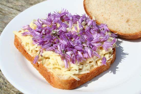 Yes, Chive Flowers are edible, mashaAllah.     Google Image Result for http://www.gardenfresco.co.uk/wp-content/uploads/2011/05/chive_flowers_are_edible_sandwich.jpg