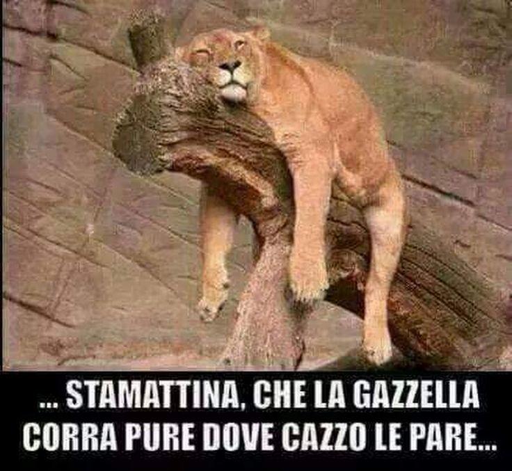 Tanto Sonno ho .... ciaooo - Patrizia Ravelli - Google+