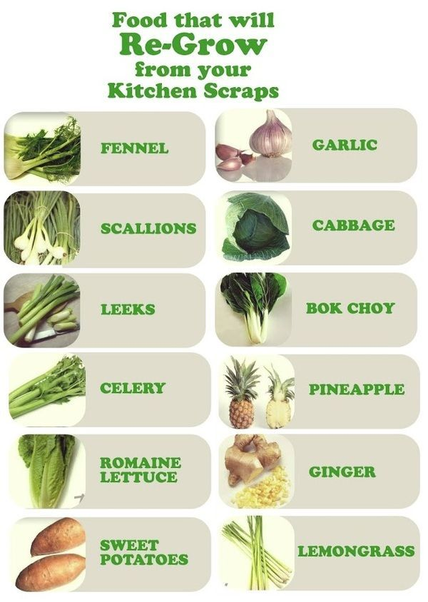 Want to grow your own food but don't have a garden? Here are tips for re-growing vegetables and fruit from kitchen scraps.