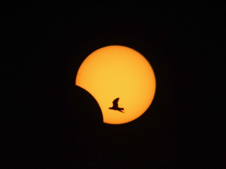 A photographer captured a bird silhouetted by the partially-eclipsed sun over southern Lebanon. Sky gazers around the world were treated to this rare hybrid solar eclipse in which an annular solar eclipse (when the only visible part of the sun appears as a bright ring around the moon) transitions into a total solar eclipse (when the moon completely blocks the sun).  Read more: http://www.businessinsider.com/beautiful-science-pictures-2013-11?op=1#ixzz2nnq4rkrO