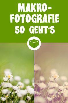 So einfach gelingt es auch Dir tolle Makroaufnahmen zu zaubern. #fotografie #makro #nahaufnahme #stilllife #fototipps #fotoideen #bearbeitung #fotobearbeitung
