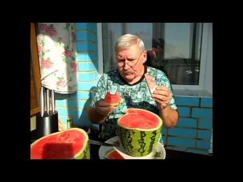 Как я выращиваю арбузы в открытом грунте