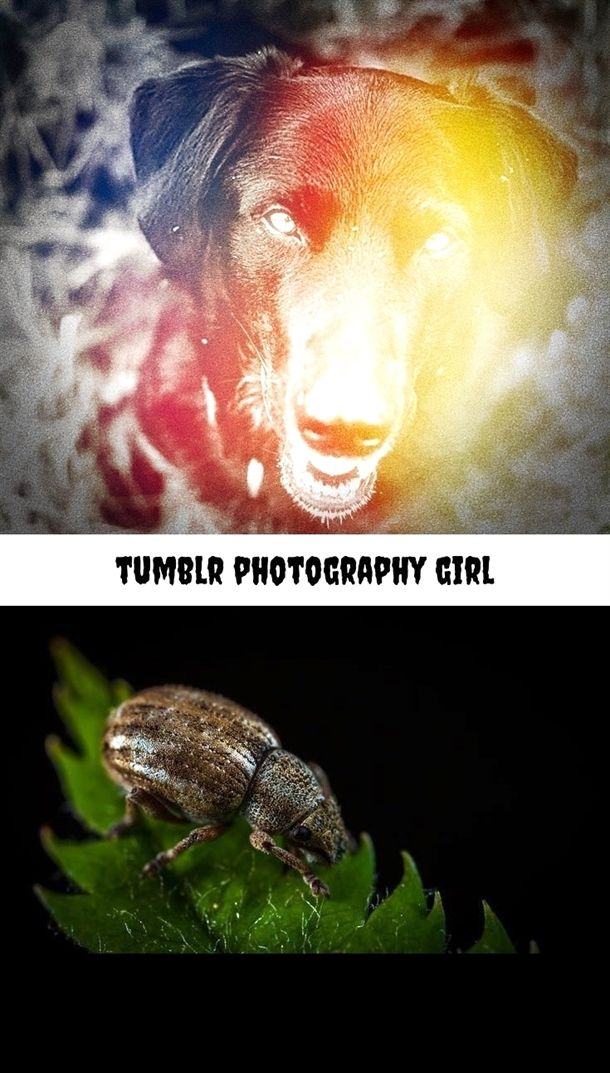 Tumblr Photography Girl 267 20180719073543 31 Photography