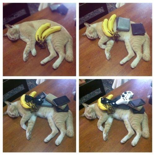 hahaha cats don't give a shit: Haha Funny, Sleepy Cat, Funny Pics, Funny Pictures, I Love Cat, Funny Stuff, Funny Photo, So Funny, Funny Memes