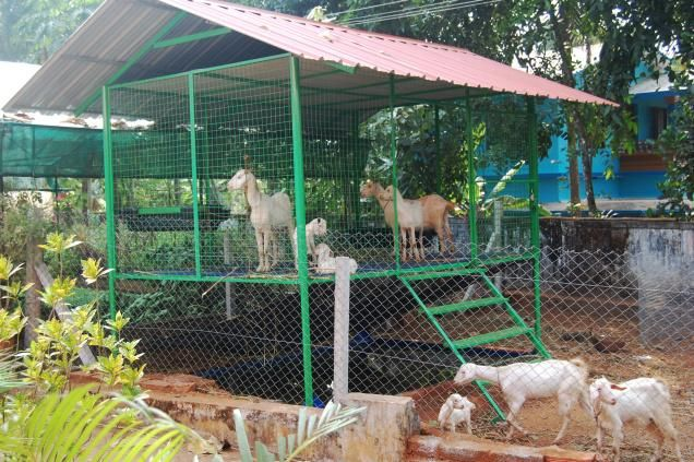 The easy to dismantle goat cage. Photo: Special arrangement
