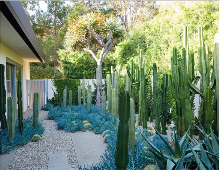 Architect Visit: New Life for a Neutra House and Garden in Beverly Hills