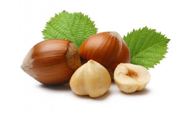 hazelnut benefits for skin and health