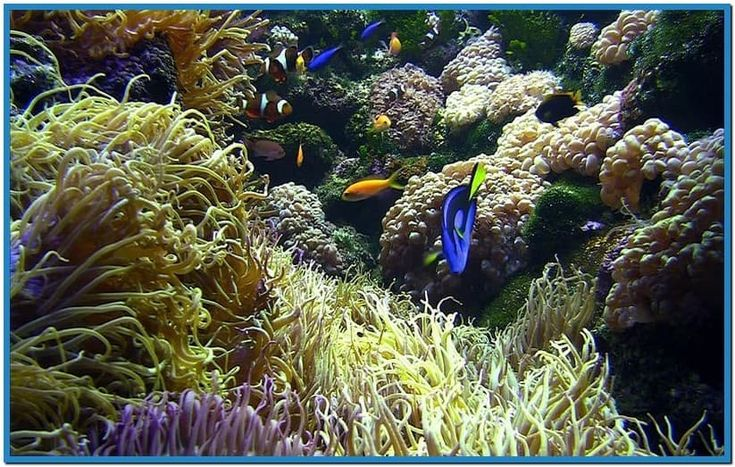 Live Aquarium Screensavers Free Download   free live aquarium screensavers download Car Pictures