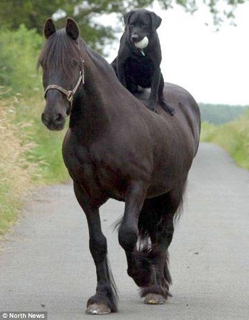 Cabot needs a horse.