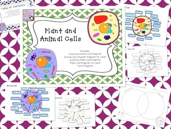 25+ Best Ideas about Cells Activity on Pinterest   Cycle ...