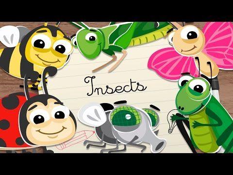 INSECTOS en INGLES para niños – Vocabulario en inglés para niños - YouTube