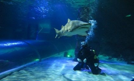Few can say they've spent quality time inside the shark tank at Kelly Tarlton's SEA LIFE Aquarium. Experience the adrenaline rush of a face-...