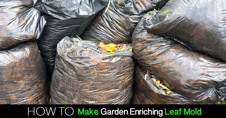 Benefits Of Leaf Mould In Your Garden