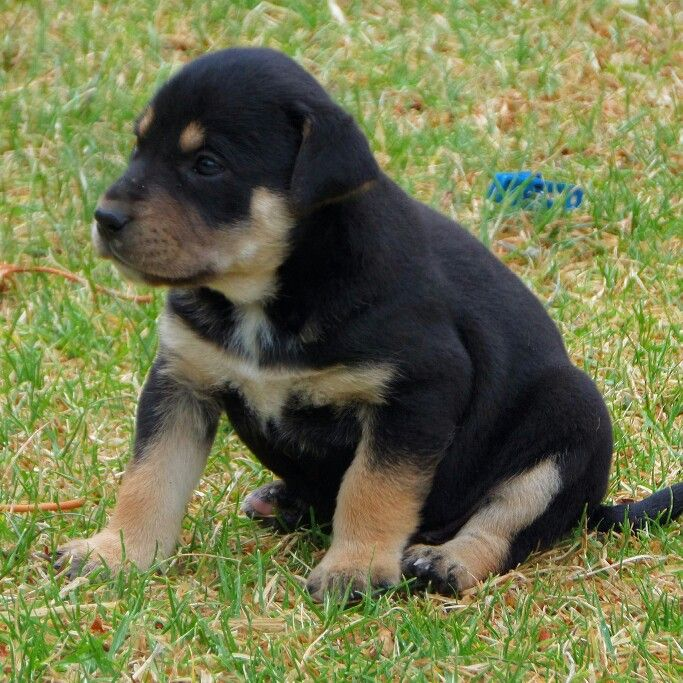 #puppy #puppylove #puppyeyes #cachorro #cachorrito #perro #dogs #Dog #dogsofinstagram #dogstagram #adoptaunamigo #Tierno #AmorPorLosAnimales #Naturaleza #Nature #Love #animallovers  #ig_sharepoint #igdaily #ig_animals #Puppi #puppies
