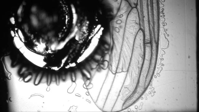 a short experiment from my last video work, rewind, perhaps i like how this sounds more then the original!