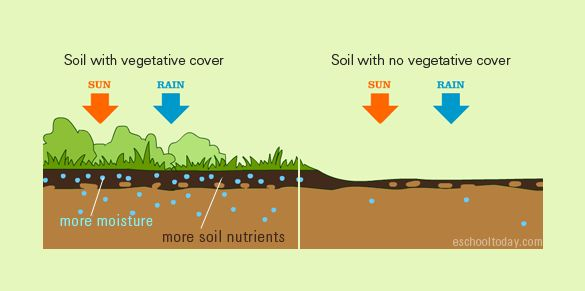 8 best soils for children images on pinterest earth for Soil king productions