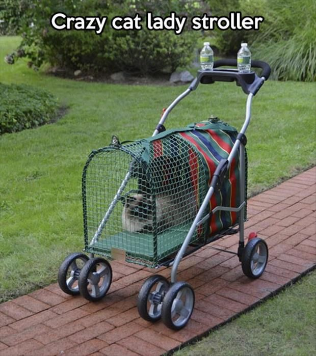 The crazy cat lady stroller, I'll take one for Christmas thanks!