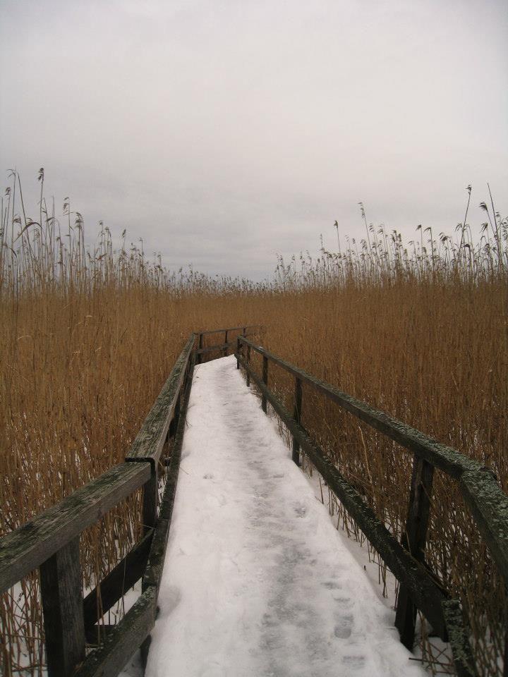 path sauna tall grass