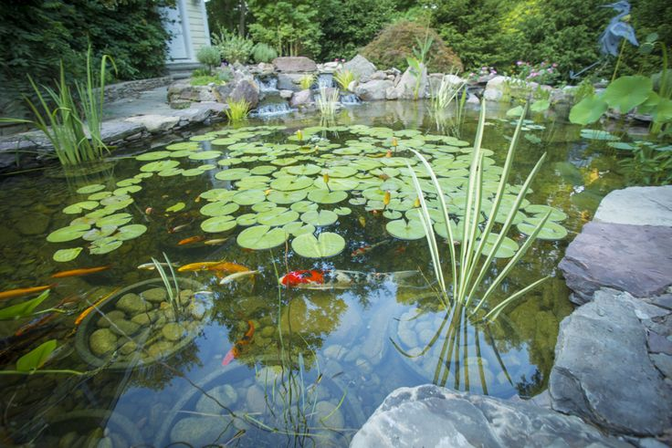 Spring Pond Cleaning and other yearly pond maintenance is crucial to the health and beauty of your DC, Maryland, and Virginia backyard pond.
