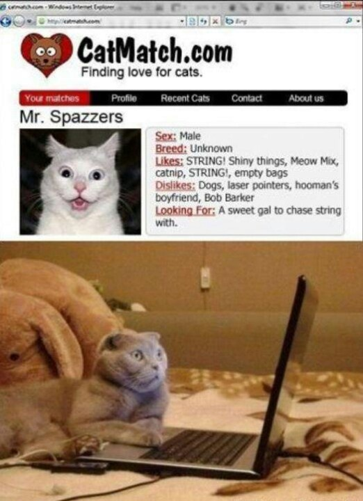 Funny things online dating