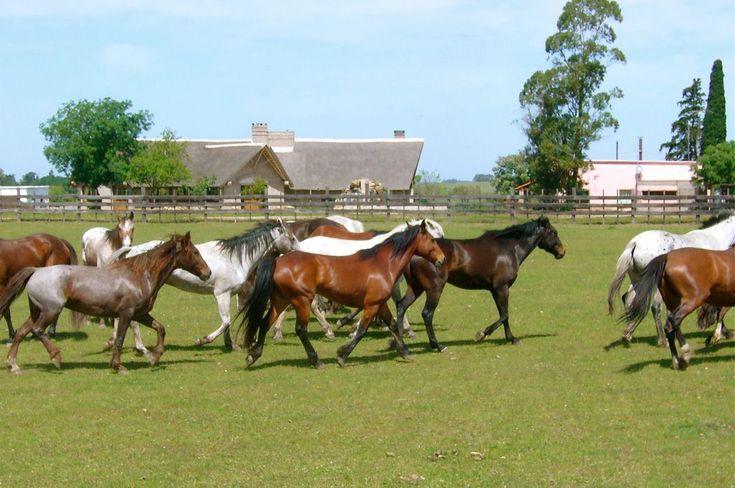Finca Piedra Estancia, Uruguay