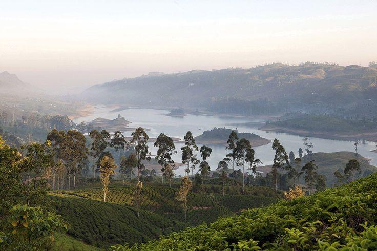 """""""Le Tea Trails est perché à 1250 mètres d'altitude, au coeur de la région de culture du thé de Ceylan, près du site classé des hauts plateaux du centre du Sri Lanka"""" - Relais&Châteaux - Ceylon Tea Trails - www.resplendentceylon.com"""