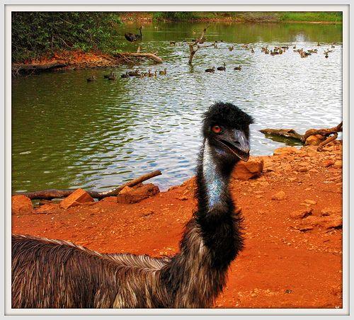 Malcolm Douglas Wildlife Park, Broome