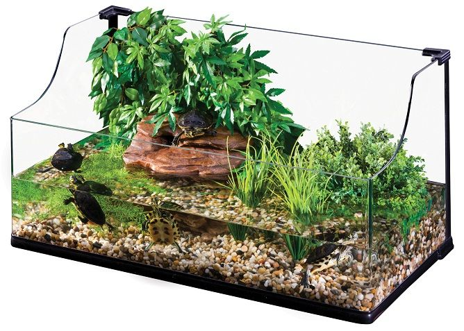 Awesome Topless Turtle Tank Water Dragon Cage Ideas
