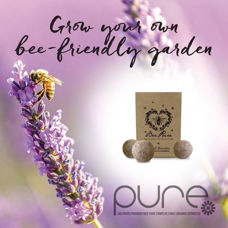Grow a bee friendly garden to improve the natural habitat of our native bees!