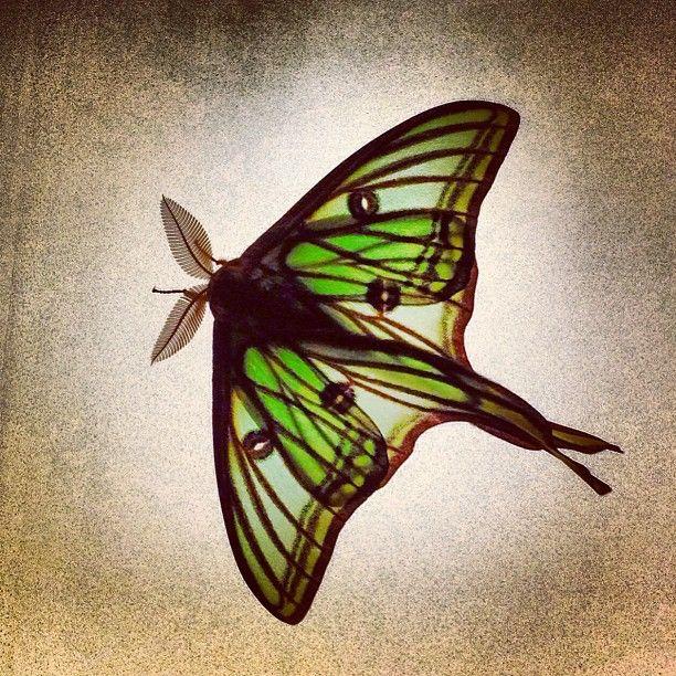 A very real butterfly in #LoQuiosc#Tremp #PallarsJussa  #Catalunya