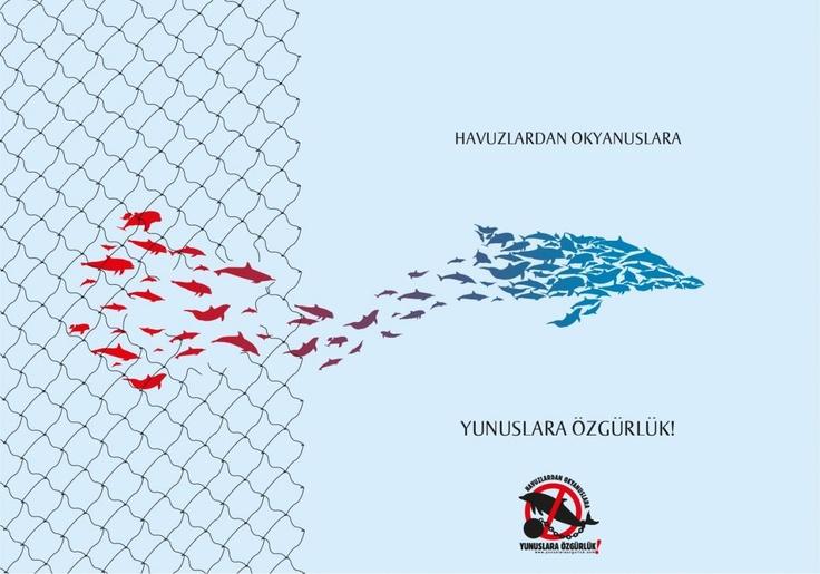 """""""Tasarımcı Baykuş"""", bu kez gecenin sessizliğinde tutsak yunuslara destek olmak için kanatlanmış...       http://yunuslaraozgurluk.com/sites/default/files/Tasar%C4%B1mc%C4%B1Baykus%CC%A7_tel%20o%CC%88rgu%CC%88ler.jpg - Freedom, dolphins, anti-captivity"""
