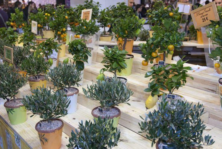 Un agrumeto in miniatura! Anche questa è la Francia dell'Artigianato in Fiera.