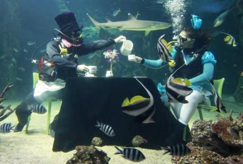 Don't know where it is but I can go anywhere I can do diving :)Like A Boss, Favorite Places, Mornings Teas, Sydney Aquariums, Underwater Mornings, Amazing Places, Tea Houses, House Underwater, Teas House