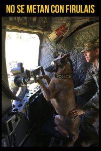 Galería: 20 Fotos de Perros Militares que demuestran su increíble lealtad