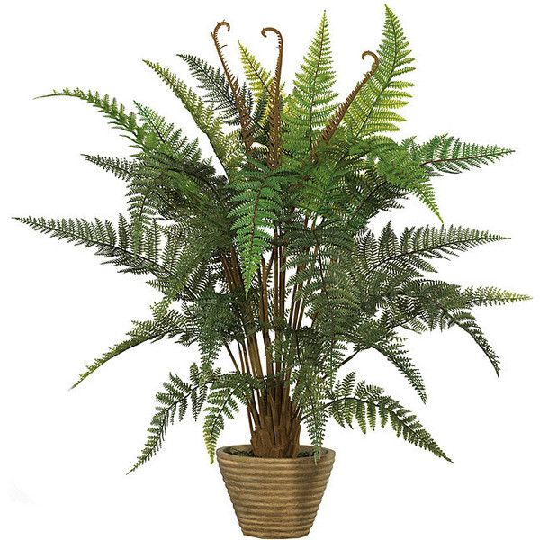'Leather Fern' Faux Silk Plant ❤ liked on Polyvore featuring home, home decor, floral decor, flowers, plants, fillers, green, flowers & plants, fake plants and faux flower stems