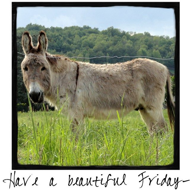 Have a Beautiful Friday! Come by and visit A Warm Hello!