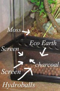 crested gecko habitat plants - Google Search