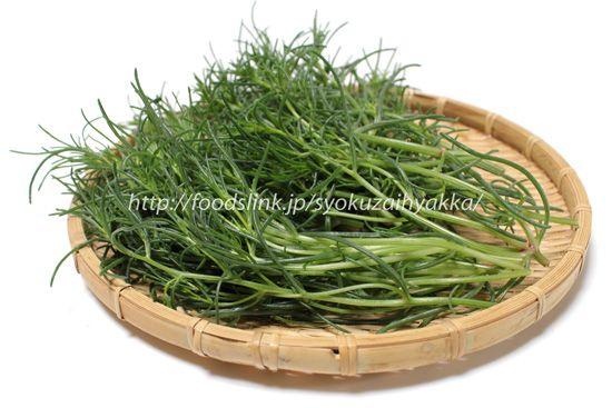 オカヒジキ(おかひじき)オカヒジキはアカザ科オカヒジキ属の一年草で、日本全国の日当たりの良い海岸の砂浜や砂礫地、塩生地等に自生しています。葉の様子が海藻のヒジキに似ている事から、おかに生えるヒジキと言う意味で「おかひじき」と名付けられました。また、別名で「ミルナ(水松菜)」とも呼ばれています。これも見た目がよく似ている海藻のミル(海松)が由来のようです