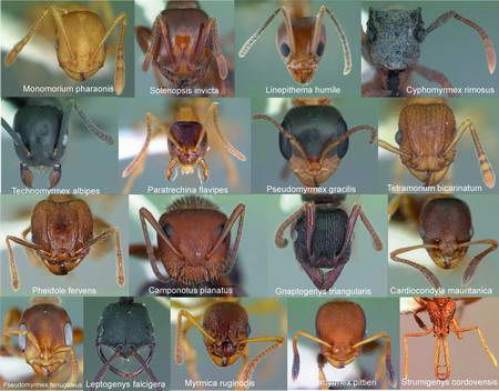 the different types of ants - Saferbrowser Yahoo Image Search Results