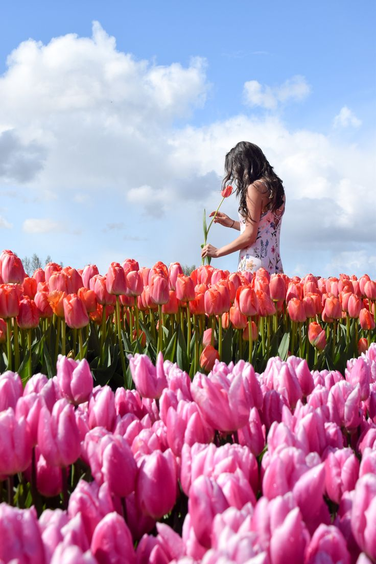 How to visit the Tulip Fields in