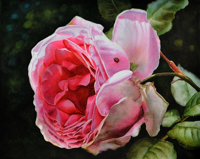 31 Best Images About Watercolor Paintings By Doris Joa On