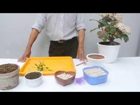 (31) Poda y reproduccion de la hortensia - YouTube