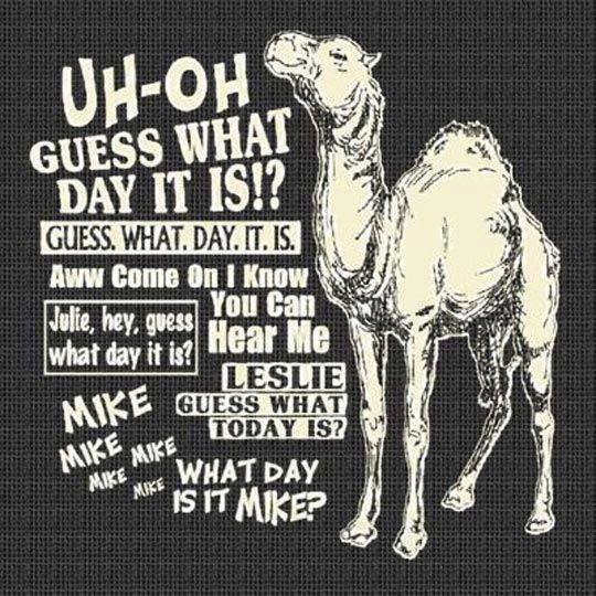 1000+ Ideas About Hump Day Camel On Pinterest