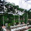 Adding a touch of green or natural elements limits the amount of décor you need for the wedding reception