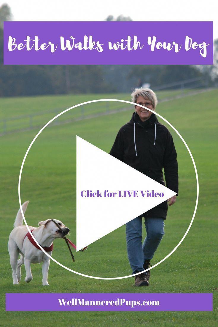 Generous Validated Dog Training Tricks Add To Shopping Cart Dog